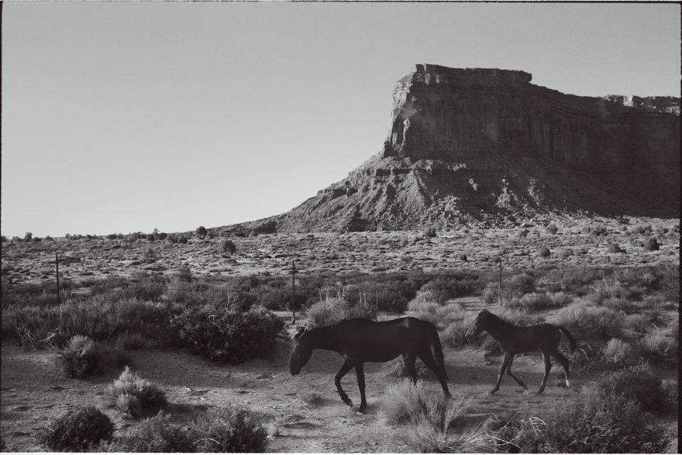 Wild Horse Nevada